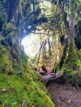 Yosunlu Orman (Mossy Forest)