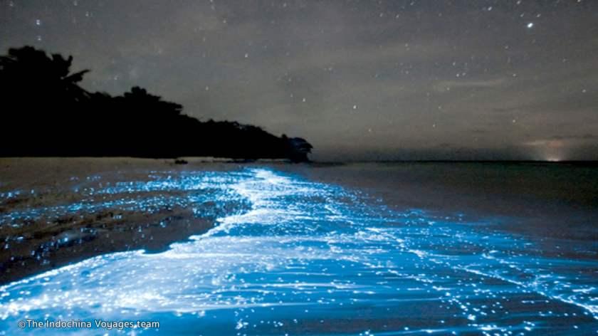 bio-luminescent-plankton