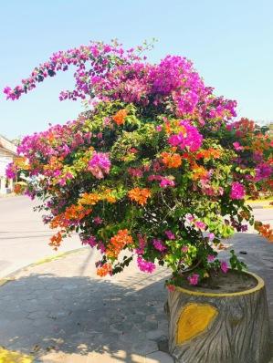 Kampot'un çiçekleri
