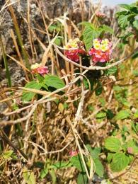 Bokor Dağı'nın güzel çiçekleri