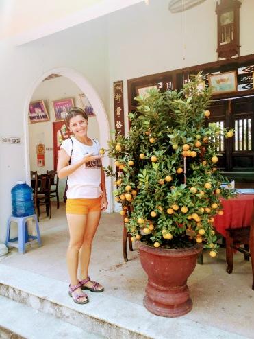 aile tapınağındaki kumkat ağacı