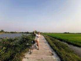 pirinç tarlaları