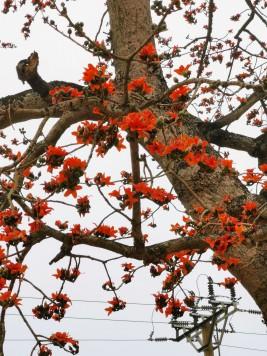 yol kenarındaki turuncu çiçekli ağaç