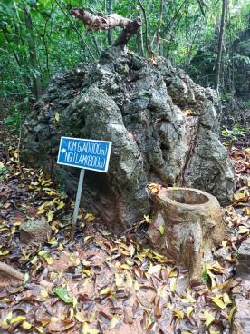 Kim Giao Ormanı