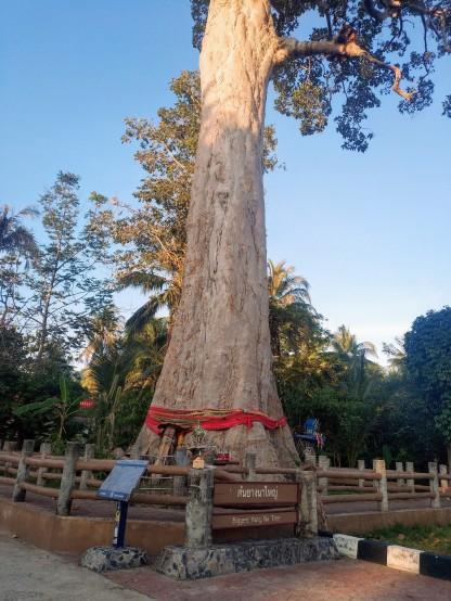Yang Na Yai Tree